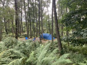 Camp in the woods